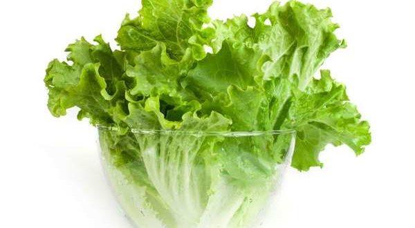 Những tác dụng của cây rau xà lách